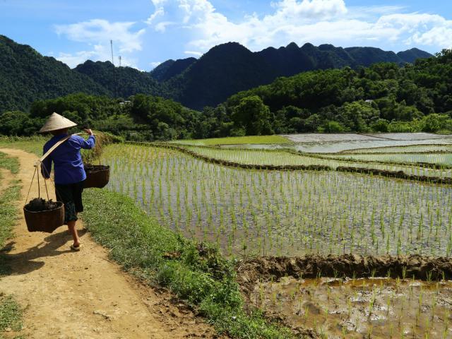 Mise en place d'un système d'irrigation pour la culture de mandariniers - photo 3 - Vision du Monde