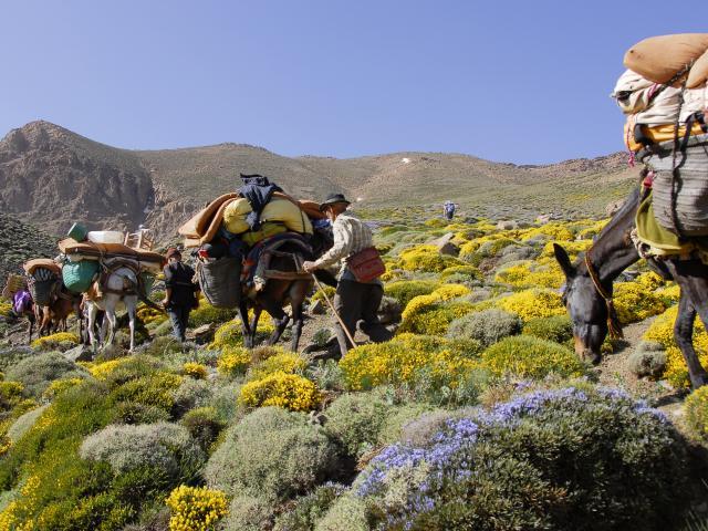 Vallées et sommets de l'Atlas central : voyage solidaire Vision du Monde