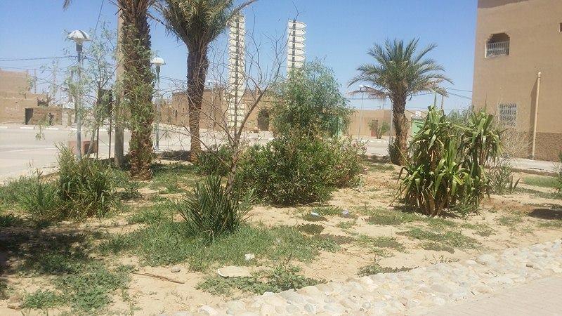 Continuité de la mise en place des espaces verts dans le village d'Hassilabiad (Erg Chebbi) - Vision du Monde