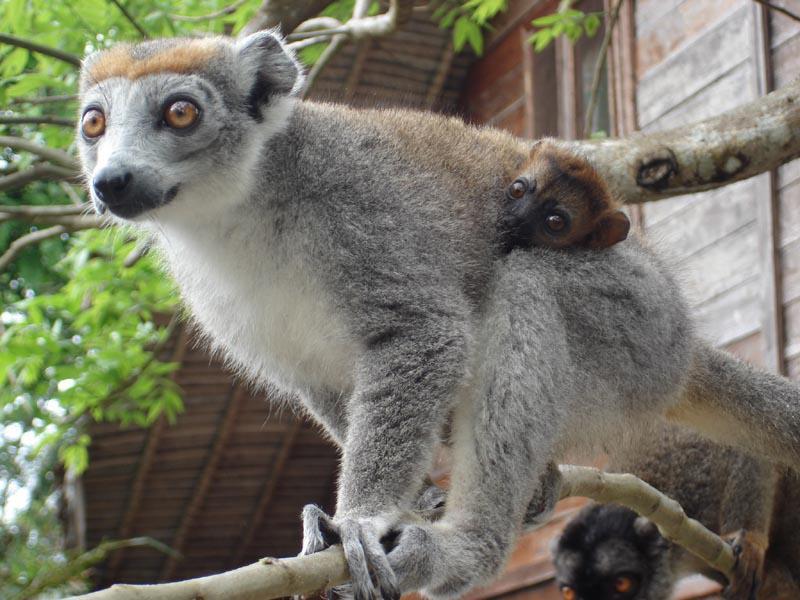 Voyage solidaire Madagascar : Vision du Monde - Photo 4
