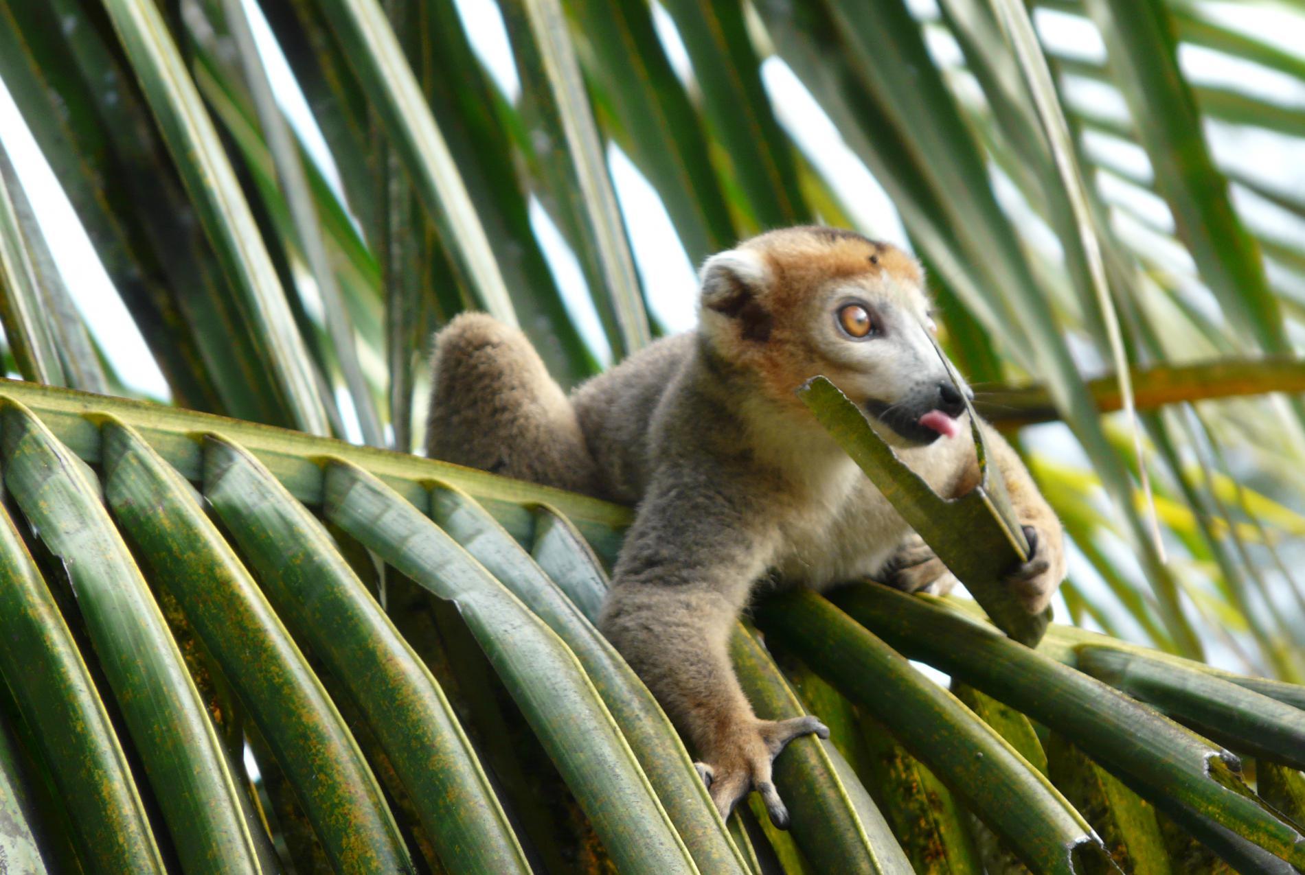 Voyage solidaire Madagascar : Vision du Monde - Photo 3