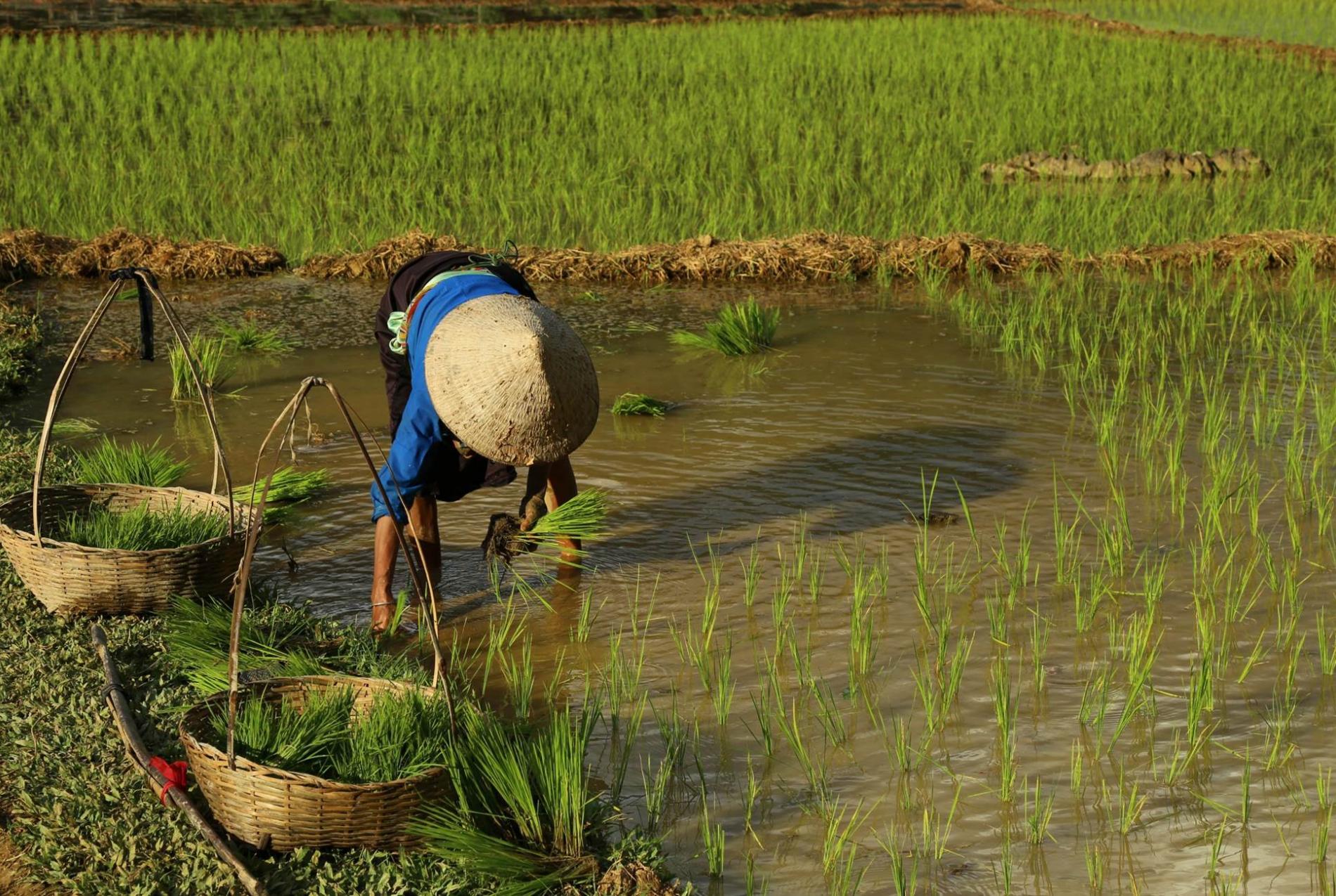 Voyage solidaire Vietnam-Cambodge : Vision du Monde - Photo 3