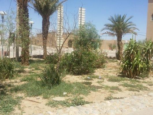 Action solidaire par Vision du Monde : Continuité de la mise en place des espaces verts dans le village d'Hassilabiad (Erg Chebbi)